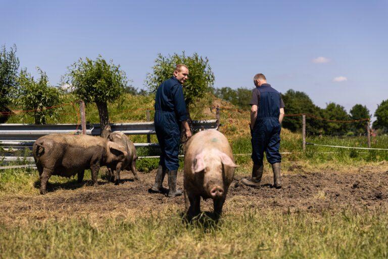 boeren en varkens